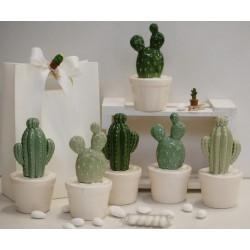 Pianta Cactus 2 modelli 3 colori assortiti confezionata