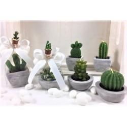 Candela Cactus con base ceramica confezionata